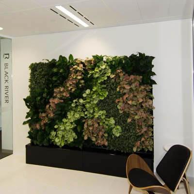 tpr cabinet green wall