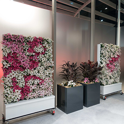 client-rbg-green-wall-cabinet-wall-pointsettia-400x400