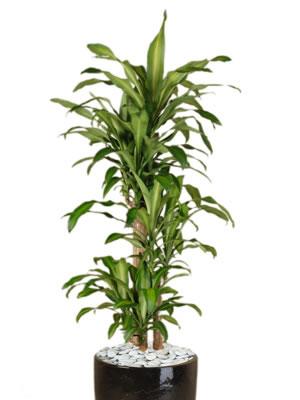 office plant hire happy plant