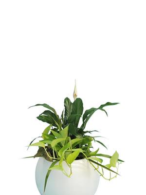 office plant hire mini garden