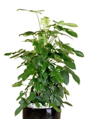 office plant hire philo panda