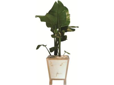 plant pot hire paddington range