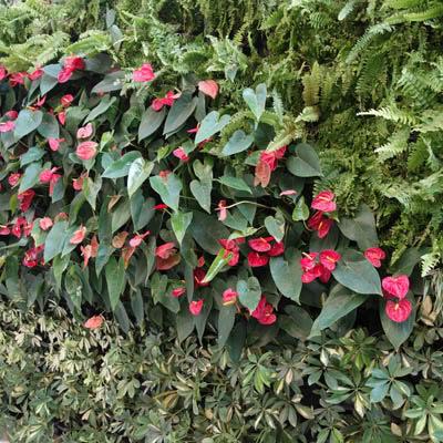 external green wall planting example