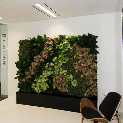 Freestanding TPR Cabinet green wall