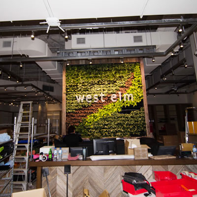 vertical garden construction west elm chatswood