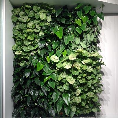 versa-green-wall-client-lend-lease-2