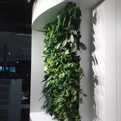 versa-green-wall-client-lend-lease