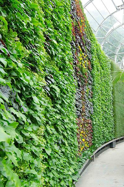 RBGS Green wall-24-2-600hx400w