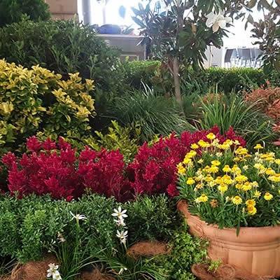Tropical Plant rentals - Autumnal theme