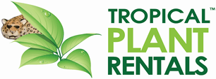 tropical plant rentals