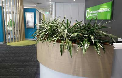 client image indoor office plants