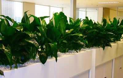 just how well do plant clean the air