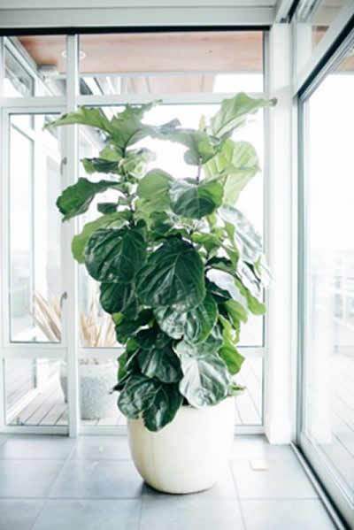indoor plant in office