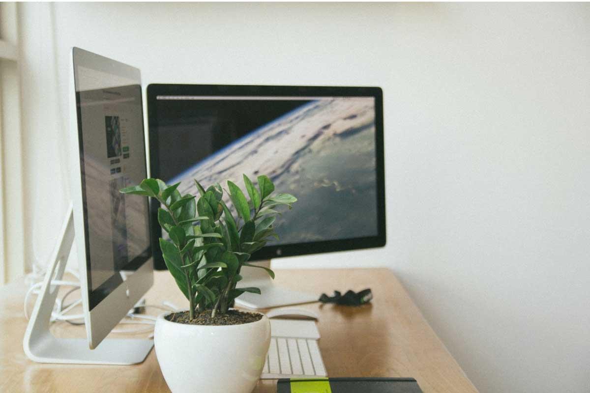 desk plant in office