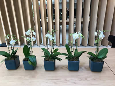 indoor plants in workplace