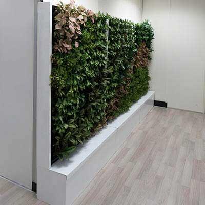 Korea Songgum Green Wall