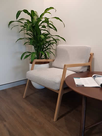 happy plant in white cone office waiting area