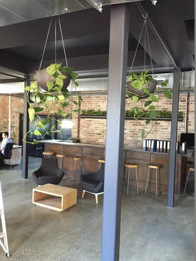 pipe planter pothos hanging baskets