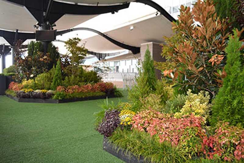 casual rosehill gardens racecourse autumn carnival 2016 atc plant grouping garden bed