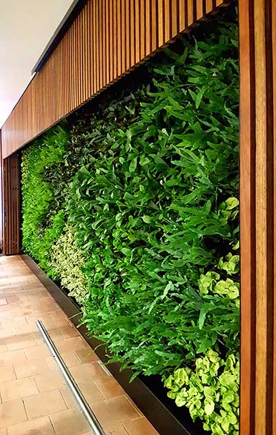 green wall garden hire