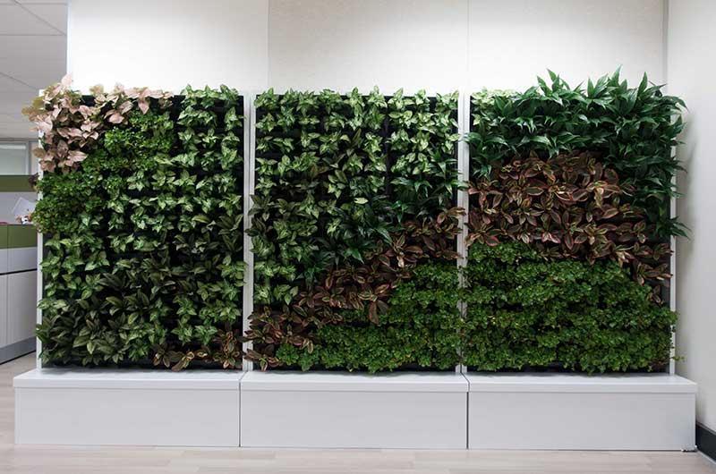 oakwood cabinet green wall