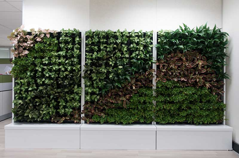 oakwood cabinet green wall