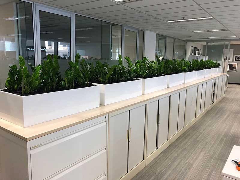 indoor plant hire office plants