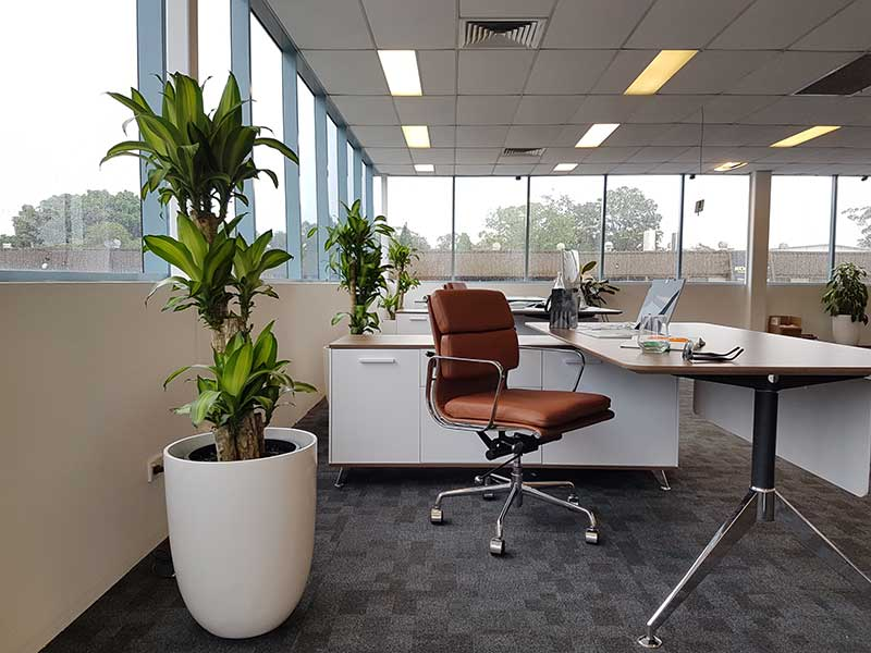 open plan office indoor plants happy white cone