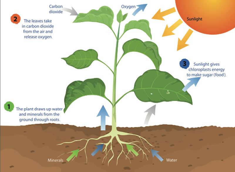 photosynthesis school resource indoor plants