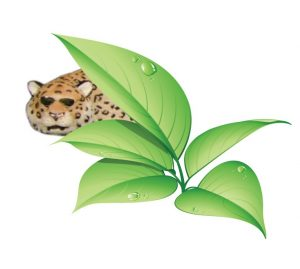 logo tpr leopard snip square