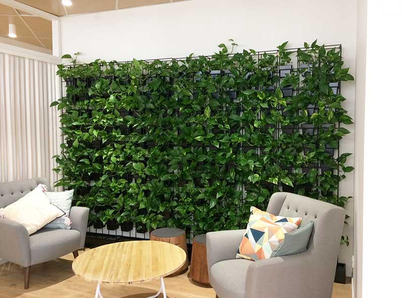pot plant vertical garden wall