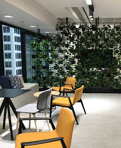 Our Indoor Plant Rentals Will Make Your Office Look Great!