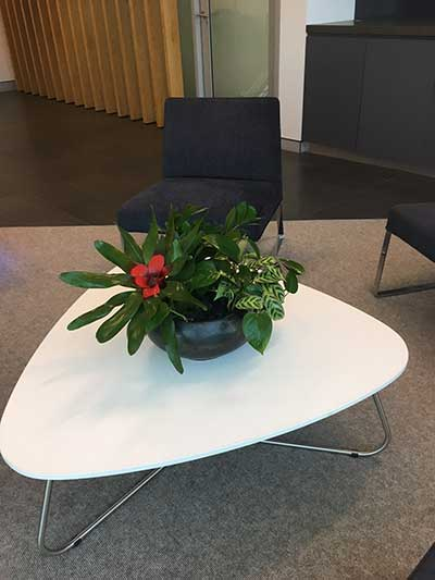 indoor plant office table