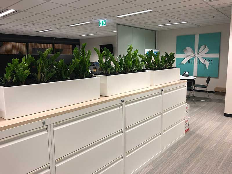 tiffany co office plants
