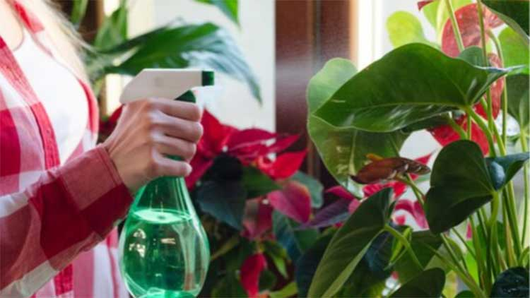 clean plants