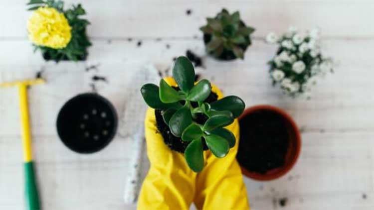 plants mini garden