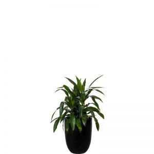janet craig 3 black cone medium