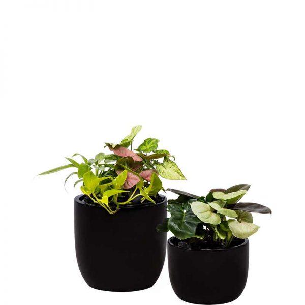 mini garden duo black desktop