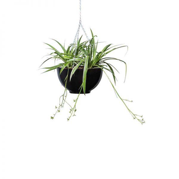 spider plant hanging bowl black