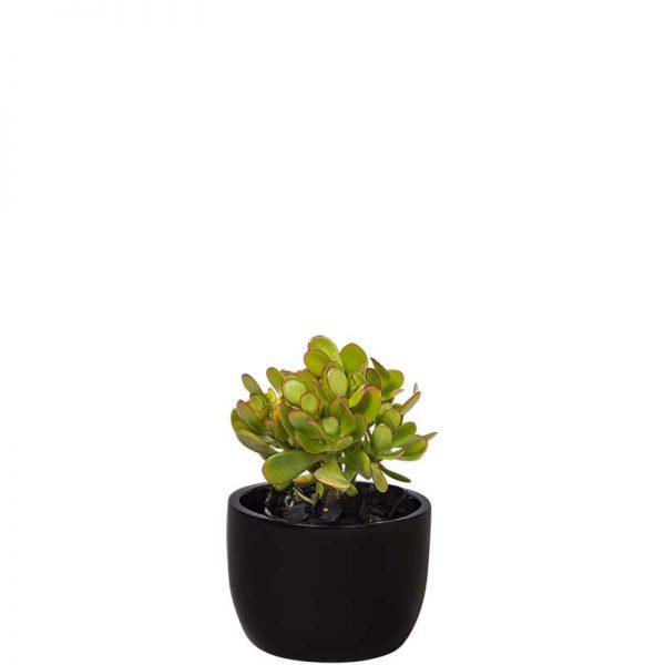 succulent black desktop