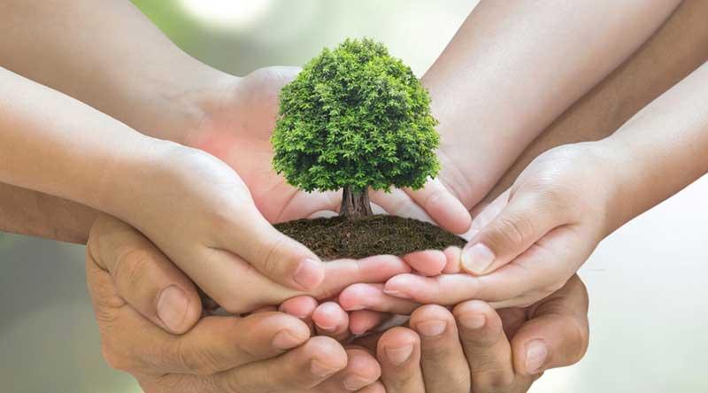 Tropical Plant Rentals Environmental
