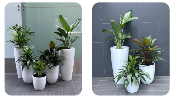 blog image for 2020 plant trends cluster planting