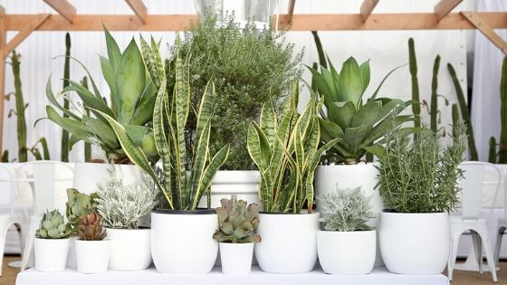 blog image for 2020 plant trends cluster