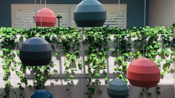 blog image for 2020 plant trends trailing plants