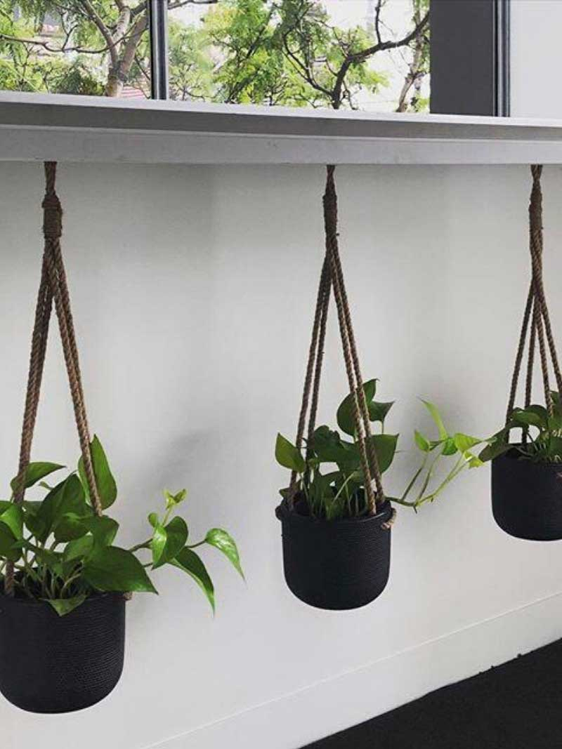 green pothos in 3 hanging rope pots black
