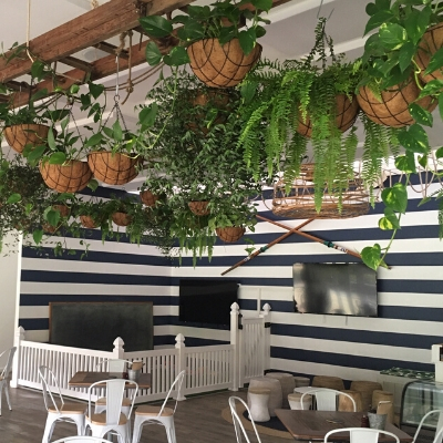 boston fern devils ivy hanging custom pots