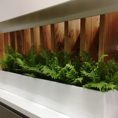 blechnum silver lady fern trough in office area 400mm x 400mm