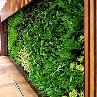 green wall Sydney office