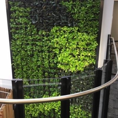 green wall vertical garden office 8