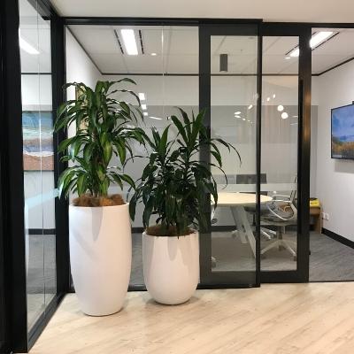 happy plant janet craig white cones reception area